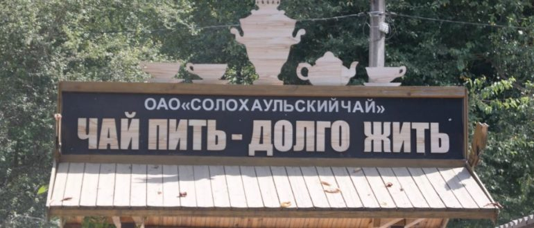 Солохаул - родина Краснодарского чая
