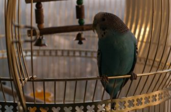Как перевезти попугая на машине